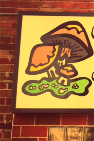 Toads Tavern