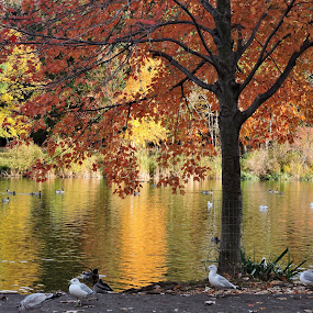 by Karen Jaffer - Nature Up Close Trees & Bushes