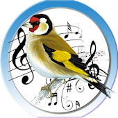 Goldfinch Trainer