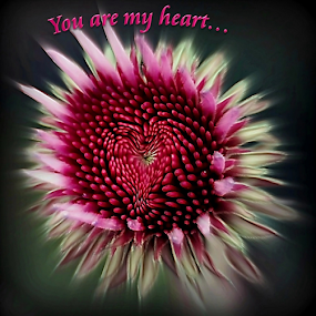 You are my Heart by Darlene Lankford Honeycutt - Typography Captioned Photos ( hearts, deez, valentines day, dl honeycutt, pink, flowers, cards, love, postcard, valentine's day,  )