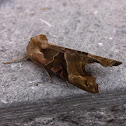 Angle shades, Agaatvlinder (dutch)