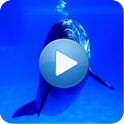 Dolphins – Sound to relax logo