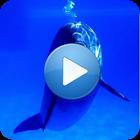 Delfines de sonido icon