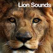 Lion Sounds