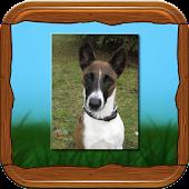 Foxterrier App