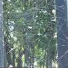 Various Spider webs