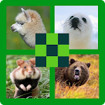 Guess the Animal 100 Pics Quiz