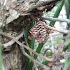 Wasp (Paper Wasp)