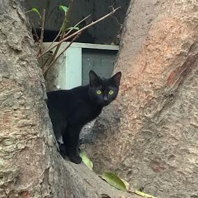Black Cat by Mallikarjun Nath - Animals - Cats Kittens