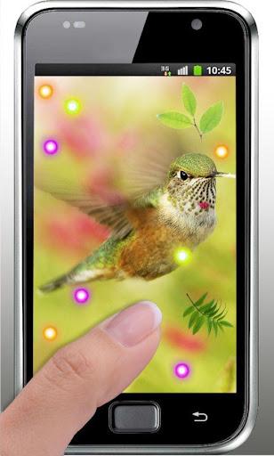 【免費個人化App】Lovely Colibri live wallpaper-APP點子