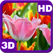 Fascinating Flowering Tulips