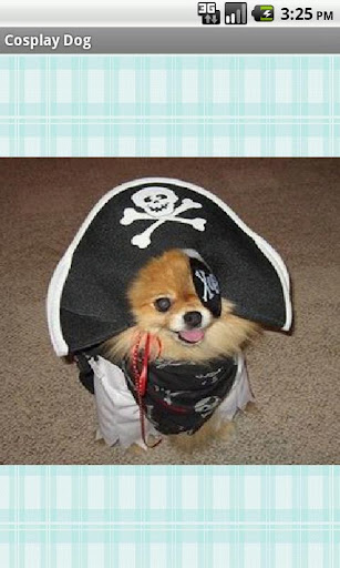 コスプレ犬