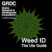 Weed ID: The Ute Guide