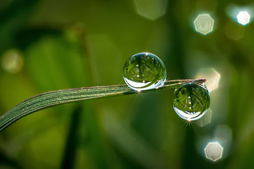 by Kawan Santoso - Nature Up Close Natural Waterdrops (  )