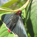 """""""Diablito"""" Butterfly (In Spanish)"""