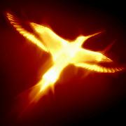 Phoenix LW