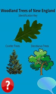 North East Tree Identification - screenshot thumbnail