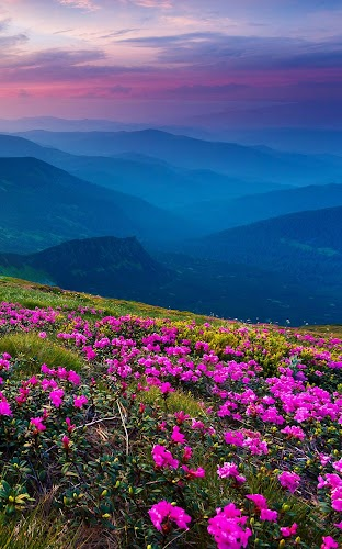 Download Mountain Flower Live Wallpaper