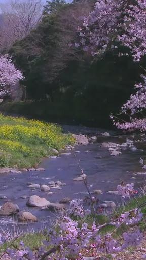 Spring River Live WallPaper