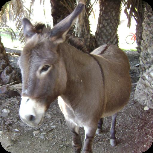 Talking Donkey Voice Changer 個人化 LOGO-玩APPs