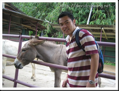 donkey in rabbit farm