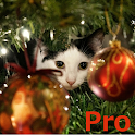Advent Calendar Xmas Cats Pro icon
