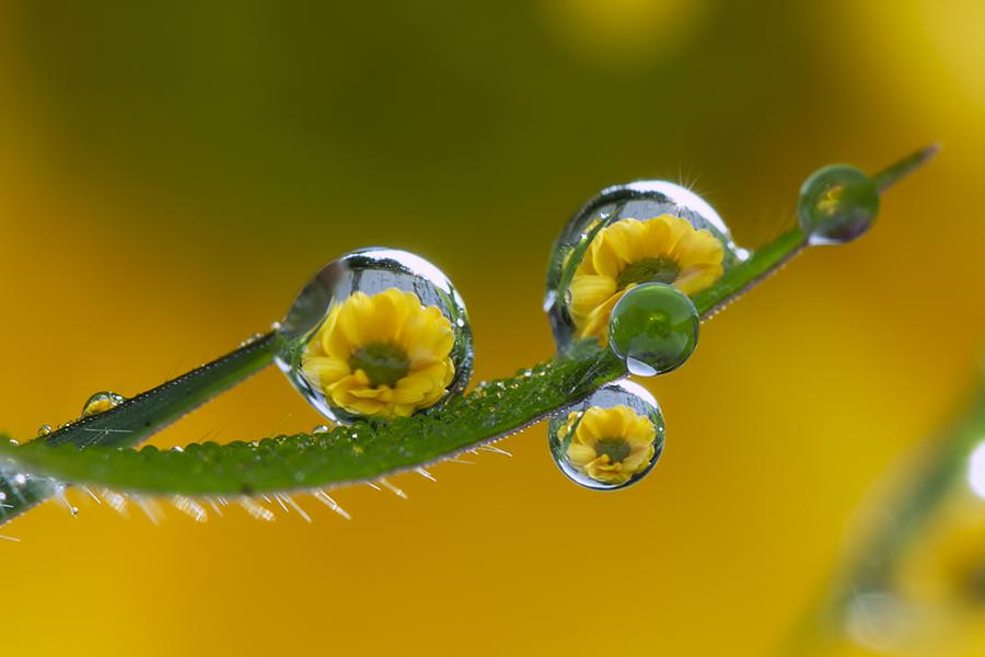 Attendre si longtemps by Citra Hernadi - Nature Up Close Natural Waterdrops