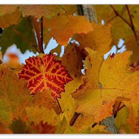 Hidden Beauty by Konstanze Singenberger - Nature Up Close Leaves & Grasses