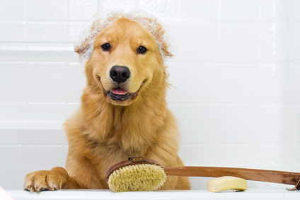5 tips on grooming your dog