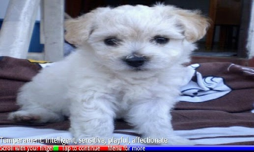 Puppies and Dogs 1 FREE- screenshot thumbnail