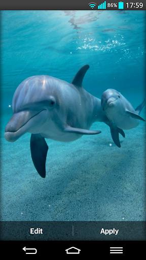 海豚 动态壁纸