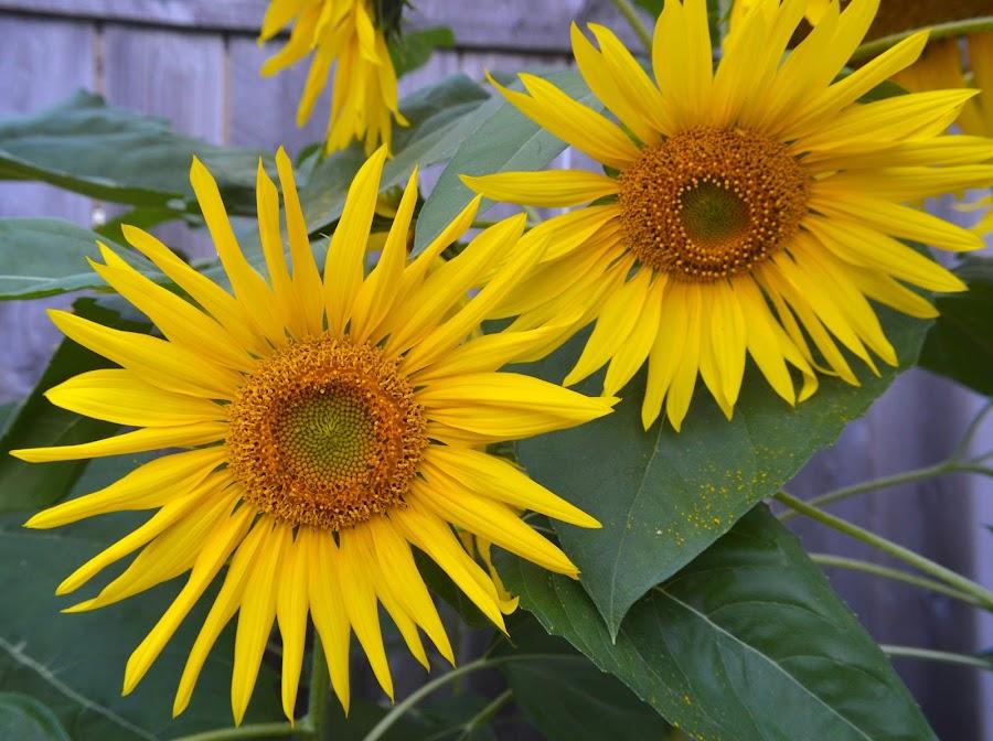 by Michelle Farmer - Flowers Flower Gardens