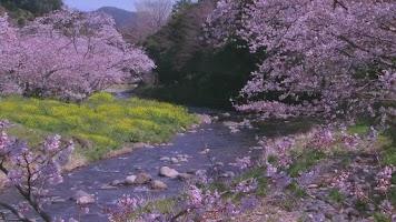 Screenshot of Spring River Live WallPaper
