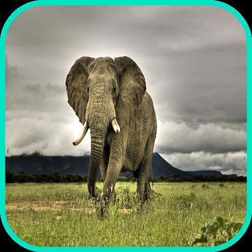 象の壁紙 個人化 App LOGO-APP試玩