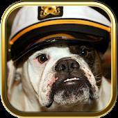 Free Bulldog Puzzle Games