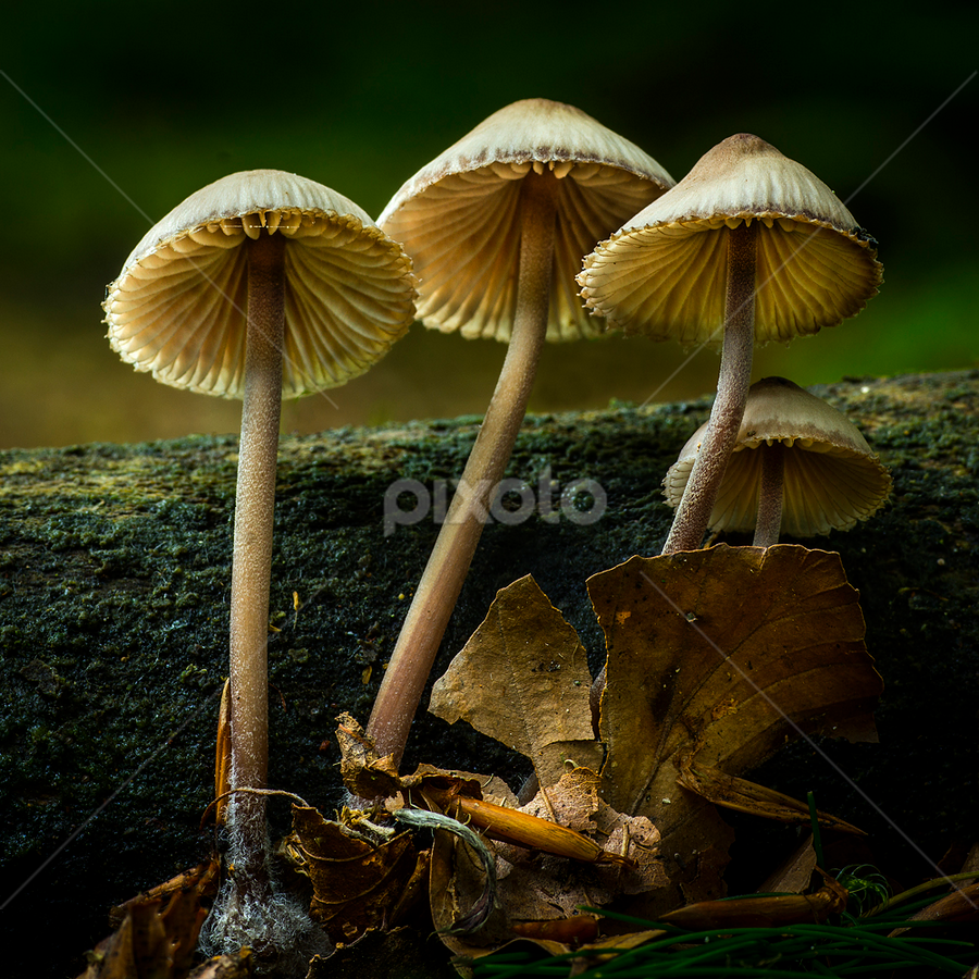 Fungis by Peter Samuelsson - Nature Up Close Mushrooms & Fungi