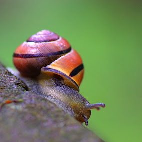 by Morgentau ;) - Animals Other ( snail,  )