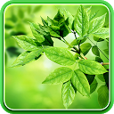 Leaves Live Wallpaper APK