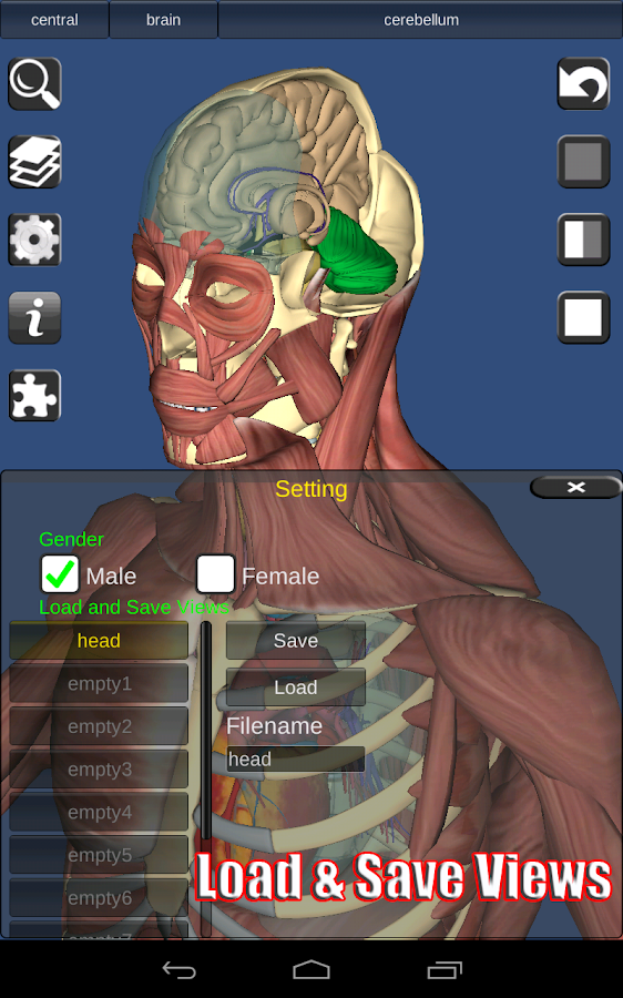 3D Bones and Organs (Anatomy)- screenshot