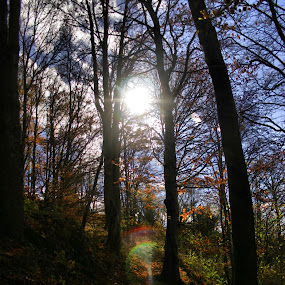 Mystic by Justus Böttcher - Nature Up Close Trees & Bushes ( magic sun )