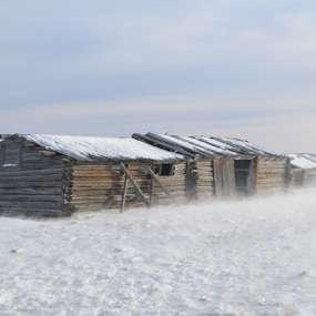 by Don Evjen - Buildings & Architecture Decaying & Abandoned ( stormy, cabin, winter, logs, montana, snow, storm, rustic )