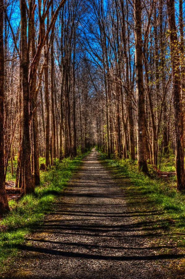 Patriots Path by Ward Vogt - Landscapes Forests ( green, hiking, photography, new jersey, patriot, patriots path, blue, trail, path, morristown, trees, nj, walk, hike, ward vogt )