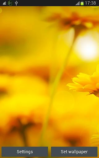 Flowers HD Wallpapers App