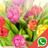 Tulip Wallpapers for WhatsApp