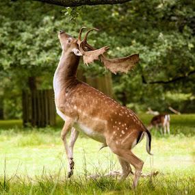 by Eddie Leach - Animals Other Mammals (  )