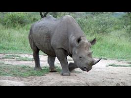 Screenshot of Video Touch - Wildlife