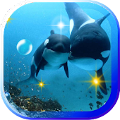 Dolphine Screen live wallpaper