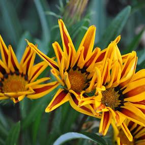 by Wendy Schultz - Flowers Flower Buds