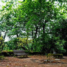 ZINTIRA by Alexandre Mestre - City,  Street & Park  City Parks ( jardim, park, sintra, lisbon, portugal, lisboa,  )