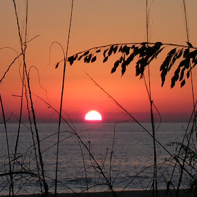 Panama City Beach by Pat Cummings - Landscapes Sunsets & Sunrises ( sunset, sea oats, seascape, beach, panama city )